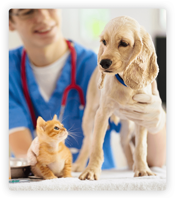 vaccination schedule for dogs and cats