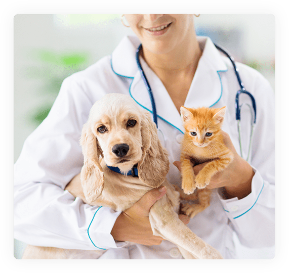 general health care vet consultation for cats