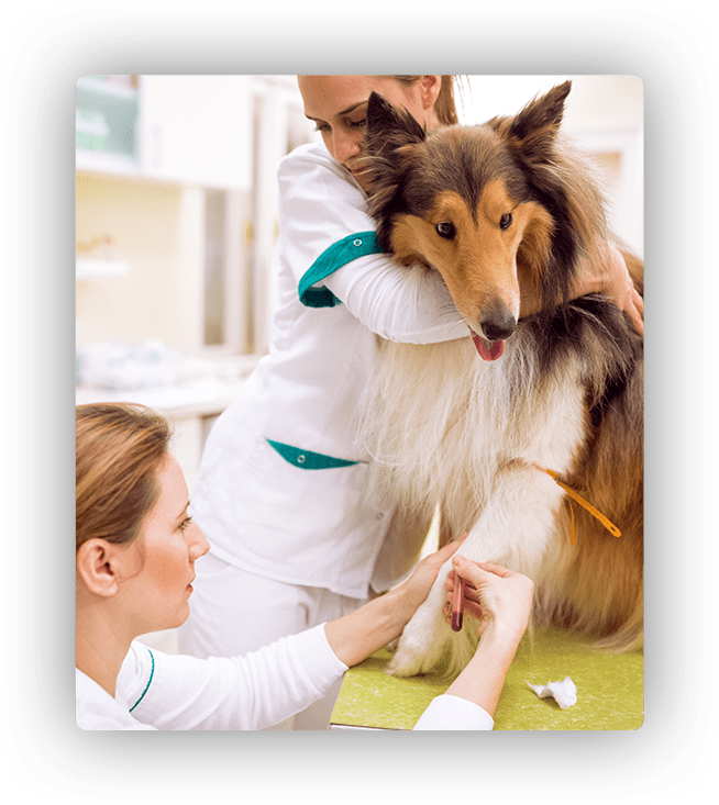 blood analysis for dogs