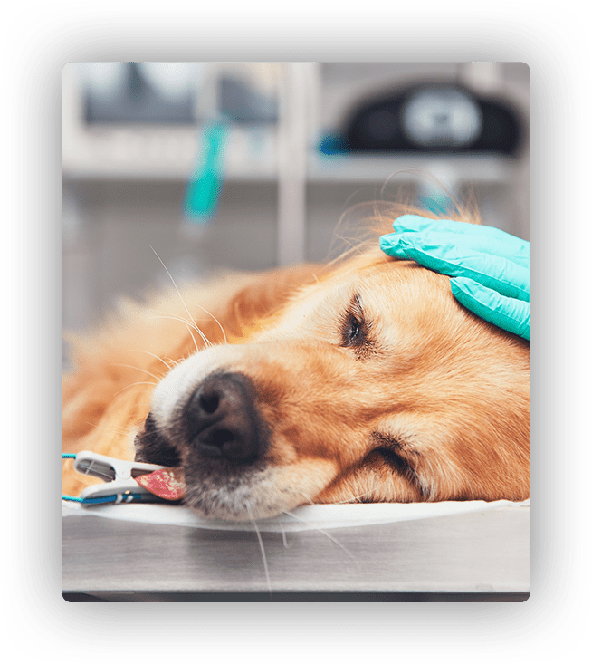 surgical procedures for dogs
