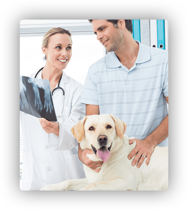 digital x-ray and ultrasounds for dogs