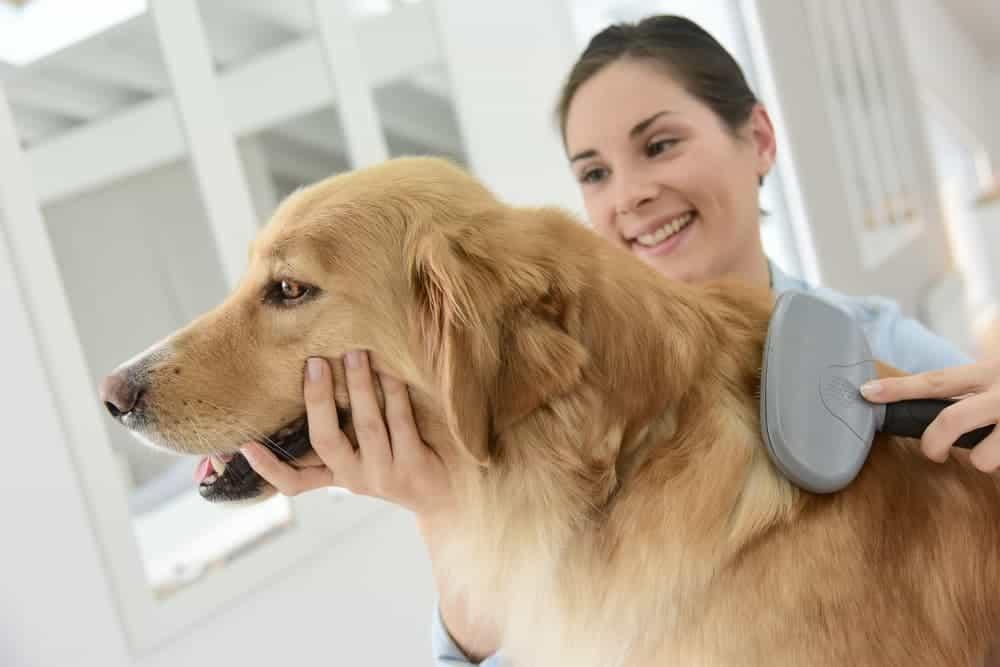 Why Do I Need To Brush My Pet | Matraville Veterinary Practice