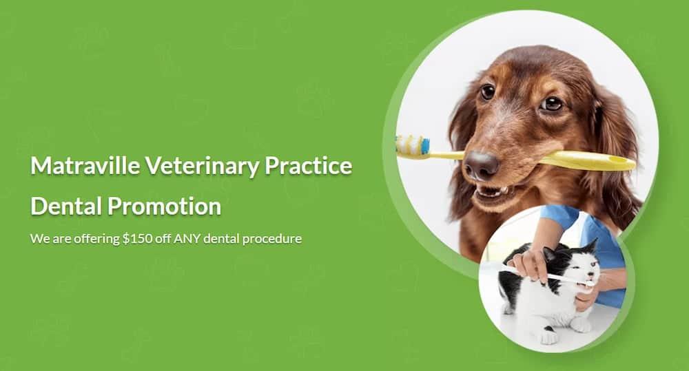 Matraville Veterinary Practice Dental Promotion