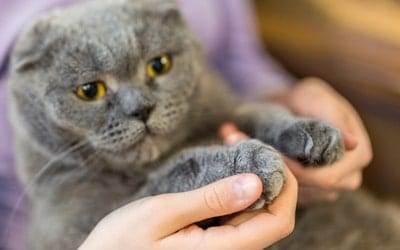 Should my cat be declawed?