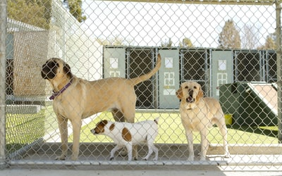 Are Boarding Kennels Good For Dogs?